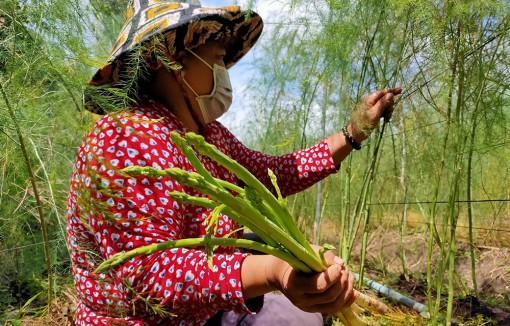 Nữ nông dân sản xuất giỏi