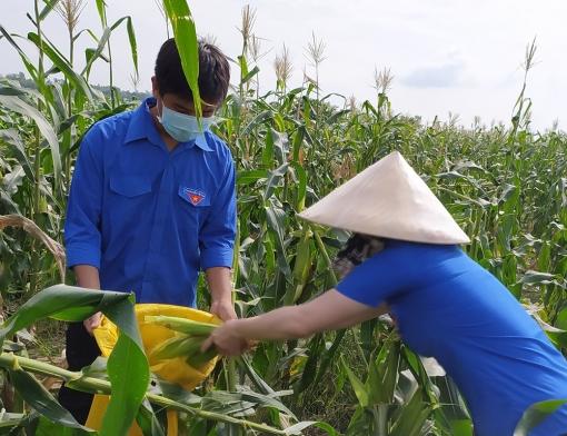 """Phú Tân: 6 tấn bắp tặng cho các """"Gian hàng 0 đồng"""""""