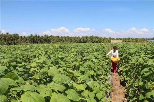 Diện tích chuyển đổi từ trồng lúa sang trồng cây màu đều có thu nhập cao