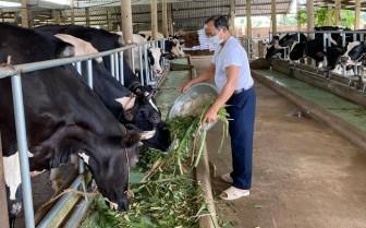 Bà Rịa-Vũng Tàu: Vẫn còn hơn 10 tấn sữa chua thơm ngon nức tiếng cần hỗ trợ