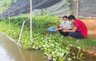 Thái Nguyên: Nuôi ốc đặc sản la liệt ở ruộng trũng, ai ở đây nhà nào nuôi cũng thành triệu phú