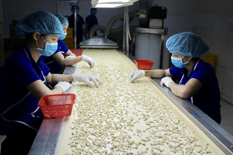 Việt Nam nhập 2,2 tỷ USD loại nông sản này về chế biến, rồi bán cho Mỹ, Nhật Bản thu 1,65 tỷ USD