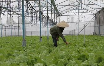 Hỗ trợ tín dụng cho doanh nghiệp đầu tư vào lĩnh vực nông nghiệp