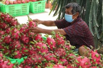 Nông sản giảm giá mạnh khiến nông dân gặp khó