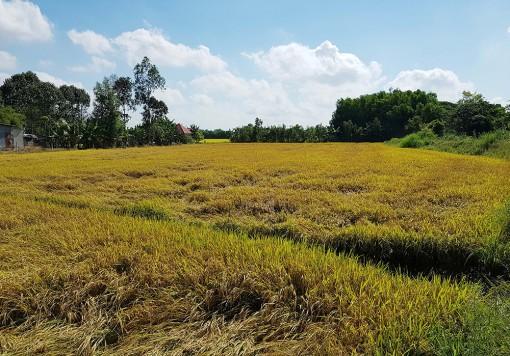 Kết nối tiêu thụ nông sản