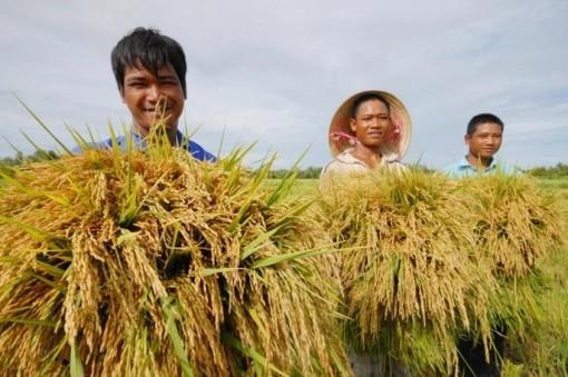 Tạo điều kiện cho doanh nghiệp tiếp cận nguồn vốn thu mua thóc gạo, hàng hóa