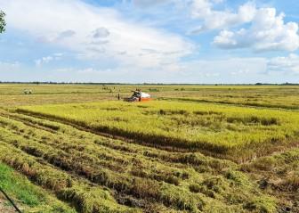 An Giang tập trung phát triển nông nghiệp