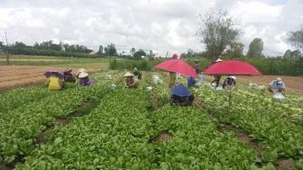 Chợ Mới hỗ trợ tiêu thụ cho nông dân hơn 659.600 tấn nông sản các loại