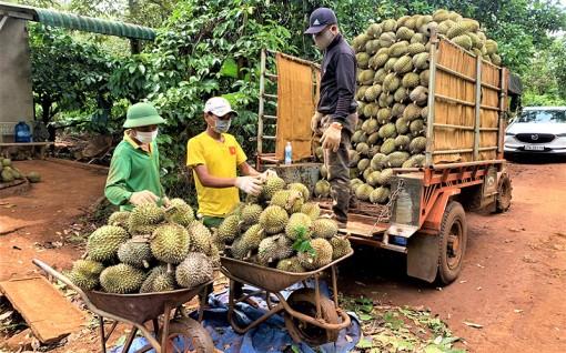 Kết nối thị trường để tiêu thụ nông sản