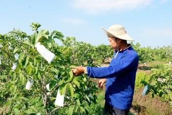 Chuyển đổi cây trồng thích ứng thổ nhưỡng tại xã Lương An Trà