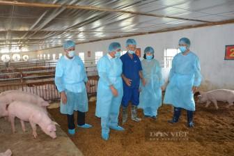 """Nam Định: """"Đổ"""" tiền tỷ vào nuôi lợn theo cách mới lạ, ông nông dân này nuôi đâu thắng đó"""