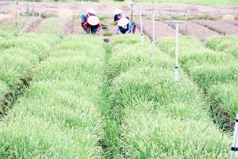 Chuyển đổi cơ cấu cây trồng trên vùng đất lúa kém hiệu quả
