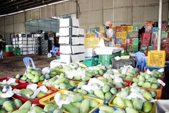 Sản phẩm nông sản đã được tiêu thụ tốt hơn
