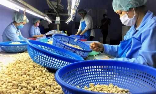 Hạt điều Việt Nam tăng thị phần tại Nga