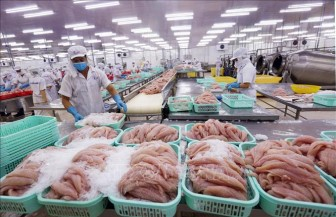 Nhiều doanh nghiệp xuất khẩu cá tra, basa Việt Nam không bị Hoa Kỳ áp thuế chống bán phá giá