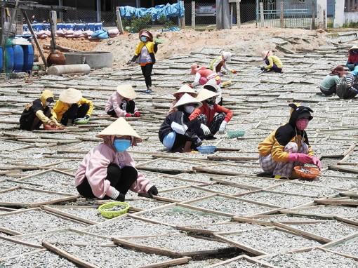 Nhộn nhịp nghề hấp cá ở Ninh Thuận