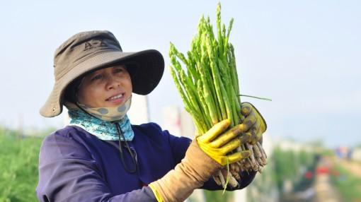 """Loại """"rau hoàng đế"""" đắt bậc nhất Việt Nam sẽ được chào bán ở Úc"""