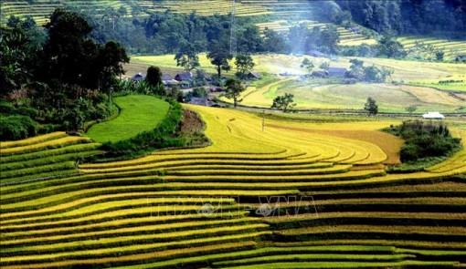 Mùa vàng trên Tả Lèng, Lai Châu