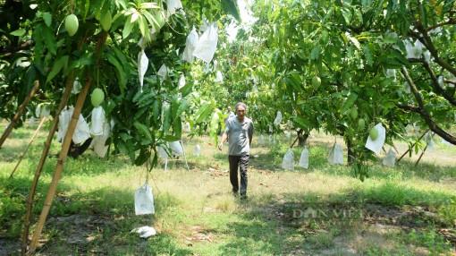 """Nhờ cách này, """"thủ phủ"""" trồng xoát cát ở Bình Định không lo thiếu nước"""