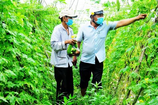 Tìm cách ổn định đầu ra cho nông sản