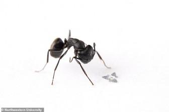 Vật thể bay nhỏ bằng hạt cát theo dõi mầm bệnh trong không khí