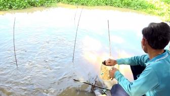 Đàn cá tự nhiên về sống tại kênh Lòng Hồ