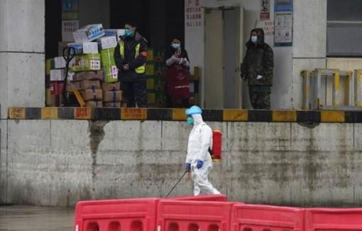 WHO nối lại cuộc điều tra về nguồn gốc virus SARS-CoV-2