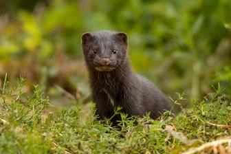 Giới chuyên gia kêu gọi rà soát động vật hoang dã để ngăn SARS-CoV-2 sinh biến thể