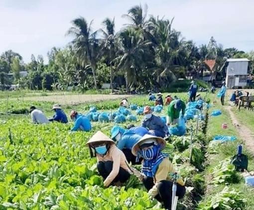 Chợ Mới hỗ trợ tiêu thụ nông sản, giúp dân vượt qua dịch COVID-19