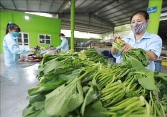 Mở lối ra cho nông sản của hợp tác xã