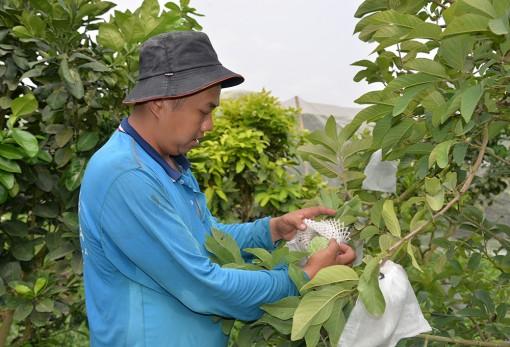 Châu Thành: Đẩy mạnh chuyển dịch cơ cấu nông nghiệp