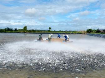 Ngành hàng thủy sản tập trung phục hồi sản xuất