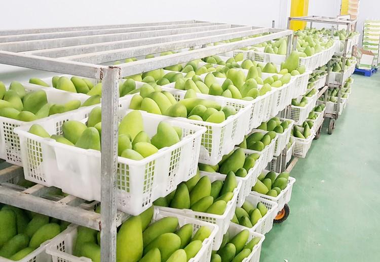 An Giang có gần 18.000ha cây ăn trái