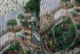 Khu rừng tuyệt đẹp trong trung tâm thương mại