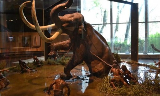 Mexico xây dựng bảo tàng voi ma mút trong sân bay quốc tế mới