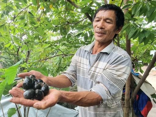 Ninh Bình: Mang ốc nhồi lên bờ nuôi suốt mùa đông lạnh giá, ông nông dân yên tâm thu tiền