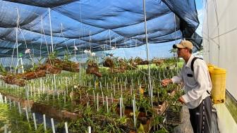 """Làm gì để nông dân đô thị """"mặn mà"""" với nông nghiệp công nghệ cao?"""