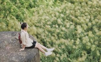 Cầu Long Biên nên thơ khi mùa lau về